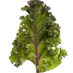 Kale (Red russian - Brassica oleracea) Kale is also one of the most nutritious leafy vegetables you can find. Packed full of vitamins, antioxidants and iron! It can be eaten raw (best when leaves are young or steamed) or added to stir fry recipes. Seedball Salad Mix